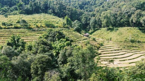Thaïlande, Chiang Mai, Partie 2 : Trek et Village Karen
